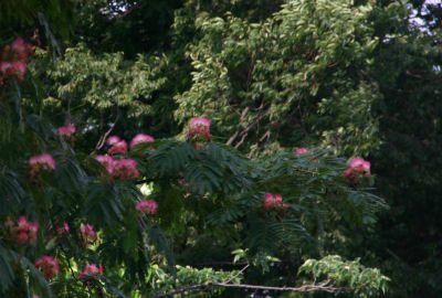 ねむの木2