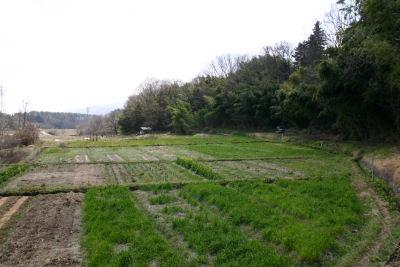 八ヶ岳自然農の会