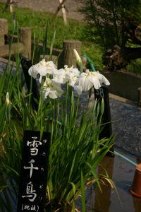 堀切菖蒲園2