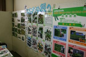 緑のカーテンフォーラム5
