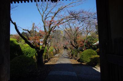 光長寺の参道