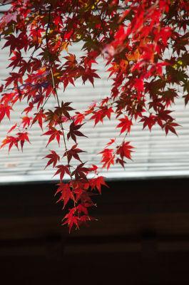 光長寺の紅葉