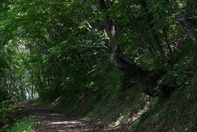 森の小道(小倉)