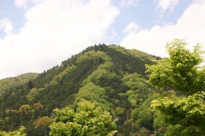 談合坂の新緑