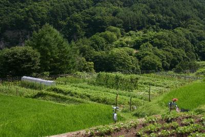 イノマタ農園1