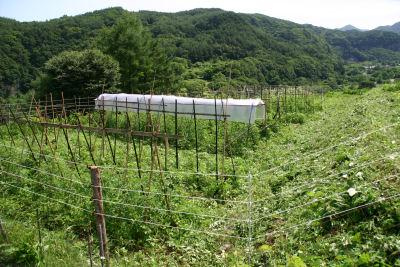 イノマタ農園2