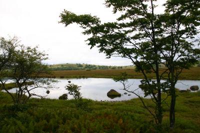 八島湿原⑥