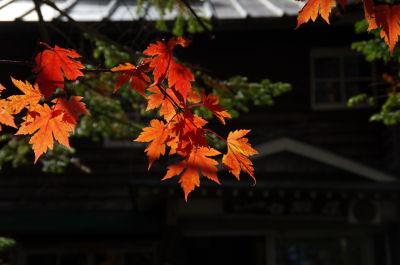 白駒池の紅葉2