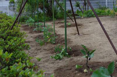 野菜植えました1