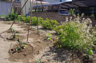 ガーデン野菜