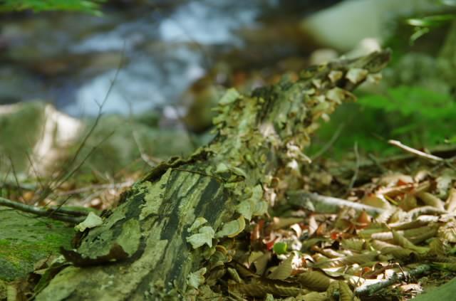 緑の本谷川3