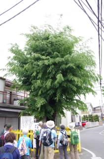 14本宮住吉神社2