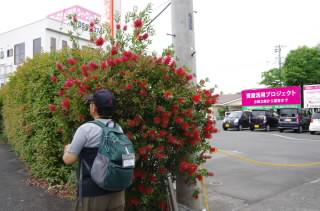19赤い花