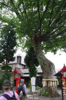 8稲積神社3