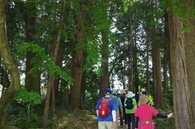 15渋沢巨樹1