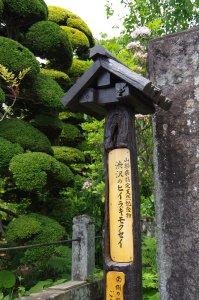 17渋沢巨樹3