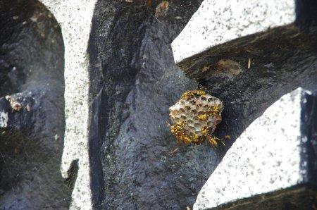 徳島堰12