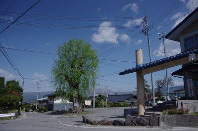 04公民館の柳の大木