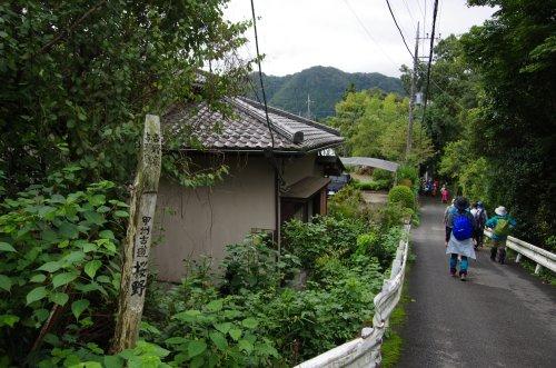 15甲州古道桜野