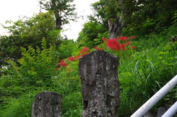 30石碑と彼岸花