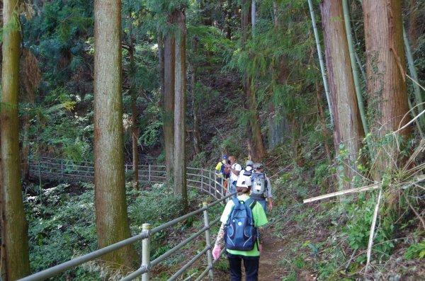 15杉林中の小径