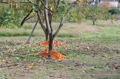 21柿皮の行方