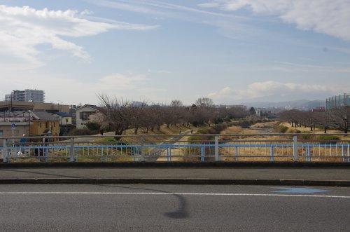 02河岸の桜並木