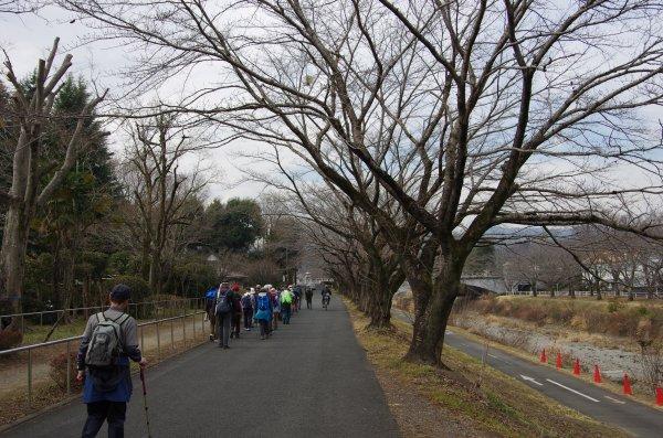 05土堤桜並木