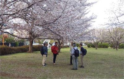 国分寺桜の下で