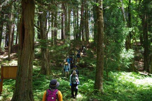 14大泉水源の自然樹林