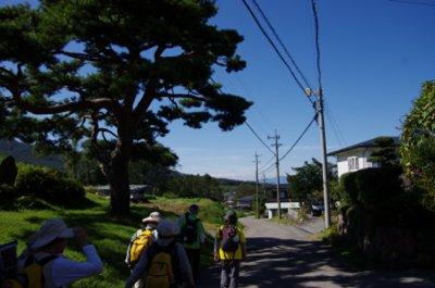 35_道路脇の松