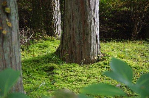 13_樹下の苔