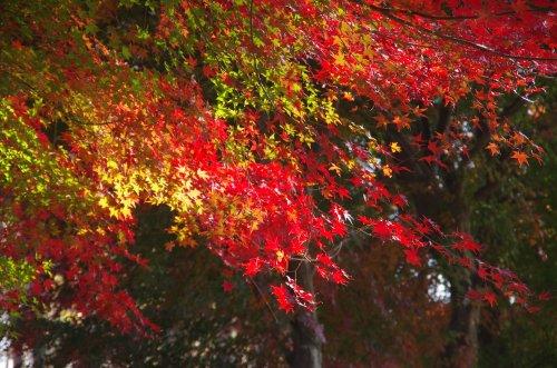 21_紅黄葉
