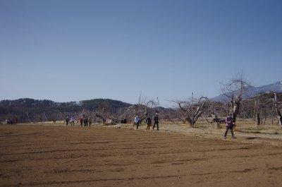 26_リンゴ畑